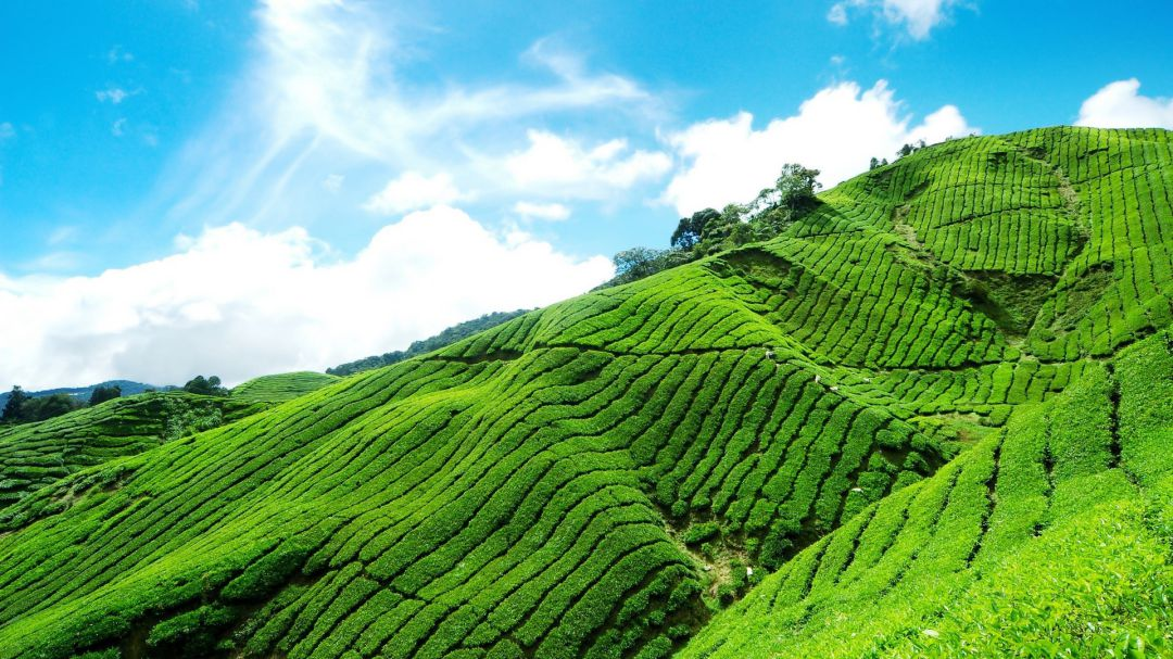 uploads/Munnar-Tea-plantation-1.jpg